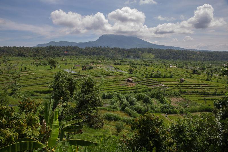 Campos de Arroz Bali