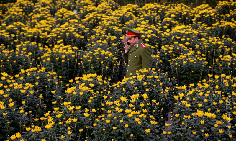 Tet Hue Crisantemos